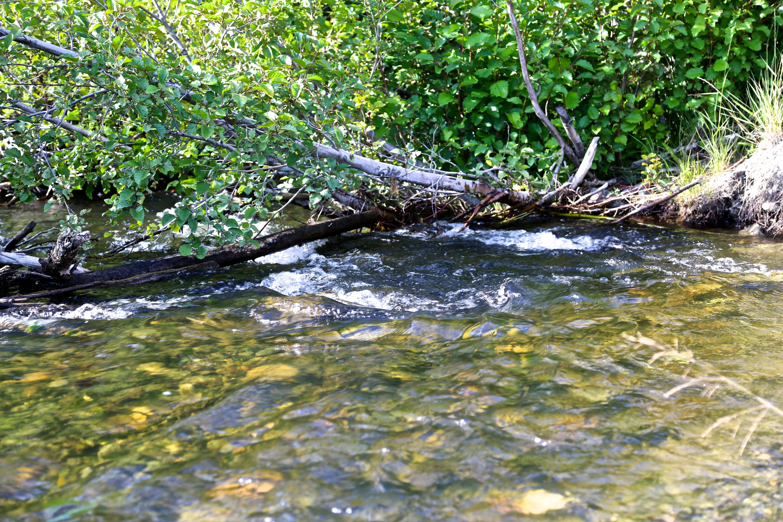 A creek besides the Klondike Highway, Yukon| Photo: Gurdeep Pandher