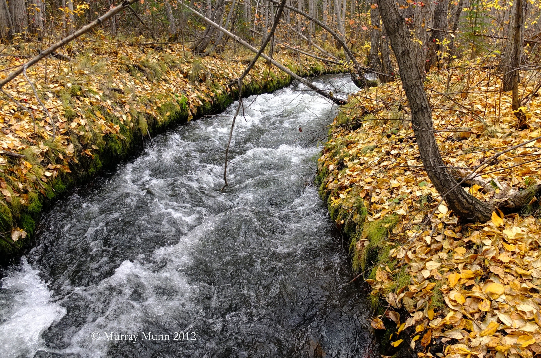 A view of McIntyre Creek | Photo: Murray Munn