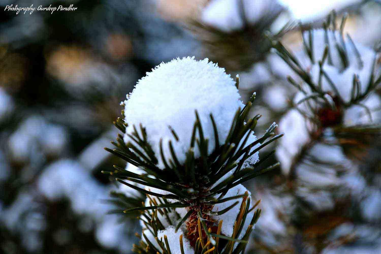 Flower of Snowflakes